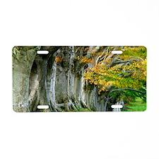 Beech trees (Fagus sp.) Aluminum License Plate