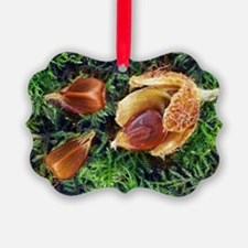 Beech nuts Ornament