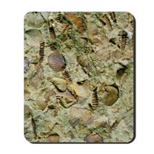 A mixed assemblage of fossils Mousepad