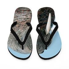 Atlantic walrus Flip Flops