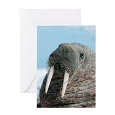 Atlantic walrus Greeting Card