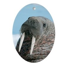 Atlantic walrus Oval Ornament