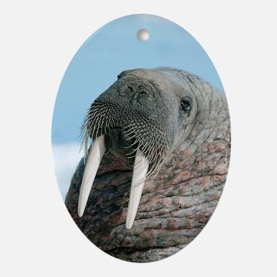 Atlantic walrus Oval Ornament