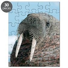Atlantic walrus Puzzle