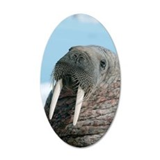 Atlantic walrus 35x21 Oval Wall Decal