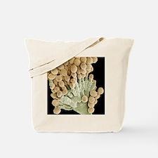 Aspergillus fungus, SEM Tote Bag