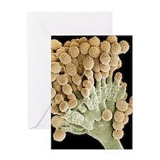 Aspergillus fungus, SEM Greeting Card