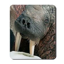 Atlantic walrus Mousepad