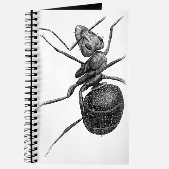 Ant, 17th Century artwork Journal