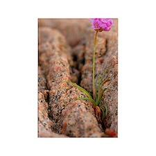 Armeria maritima flower Rectangle Magnet