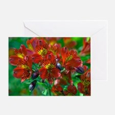 Alstroemeria 'Red Beauty' Greeting Card