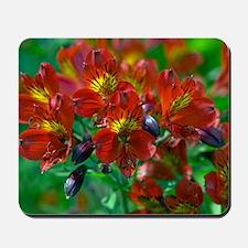 Alstroemeria 'Red Beauty' Mousepad