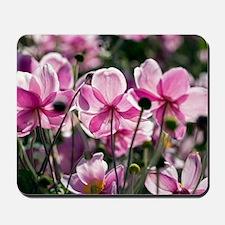 Anemone hupehensis Mousepad