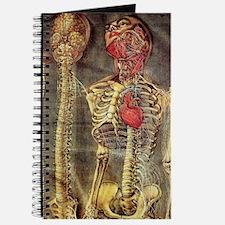 Anatomical model, 18th century Journal