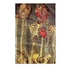 Anatomical model, 18th ce Postcards (Package of 8)