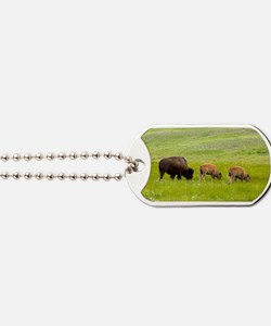 American bison, Canada Dog Tags