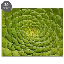 Aeonium tabulifrome Puzzle