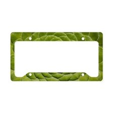 Aeonium tabulifrome License Plate Holder