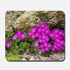 Alpine primula (Primula hirsuta) Mousepad