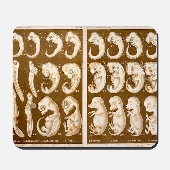 1874 Ernst Haeckel Embryo drawings Mousepad