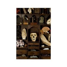 A cabinet of Curiosities Rectangle Magnet