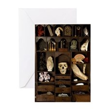 A cabinet of Curiosities Greeting Card