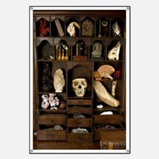 A cabinet of Curiosities Banner