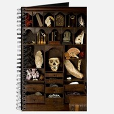 A cabinet of Curiosities Journal