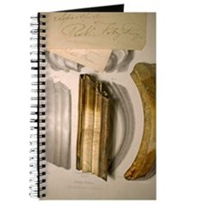 1838 Toxodon teeth Journal