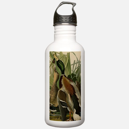 Mallard duck Audubon B Water Bottle