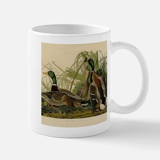 Mallard duck Audubon Bird Vintage Print Mugs