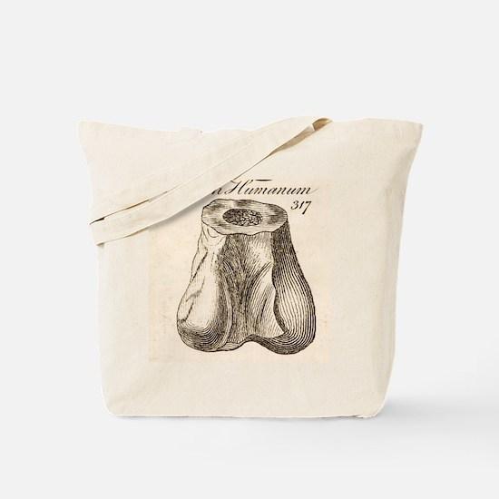 1763 Dinosaur bone misidentified scrotum Tote Bag