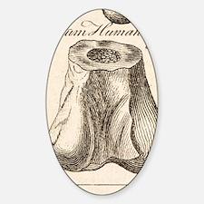 1763 Dinosaur bone misidentified sc Sticker (Oval)