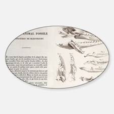 1770 Maastricht Mosasaur by Cuvier Decal