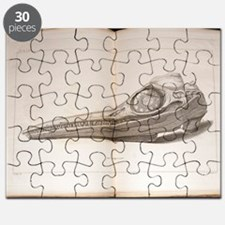 1814 Mary Anning first ichthyosaur skull Puzzle