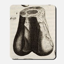1677 First dinosaur bone by Robert Plot Mousepad