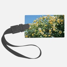 Rose (Rosa 'Goldfinch') Luggage Tag