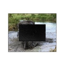 African Bush Elephant crosses a rive Picture Frame