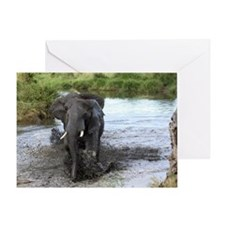 African Bush Elephant crosses a rive Greeting Card