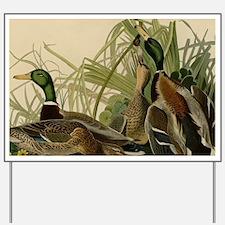 Mallard duck Audubon Bird Vintage Print Yard Sign
