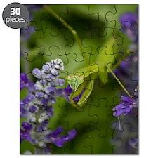 The Mantis Puzzle