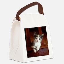 Adorable Calico Kitten.. Canvas Lunch Bag
