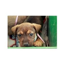 Puppy in a box 2 Rectangle Magnet