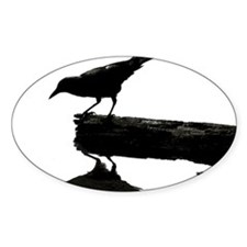 Blackbird Squared Decal