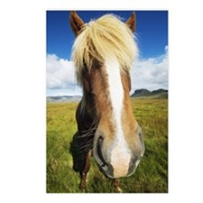 Iceland, Skogafoss, horse Postcards (Package of 8)