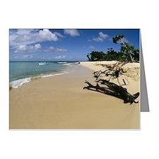 Scenic beach, Buck Island, S Note Cards (Pk of 10)