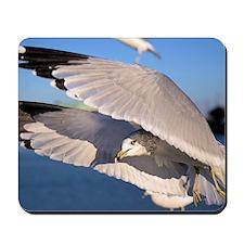 Flying Seagull Mousepad