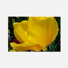 Yellow Tulip Rectangle Magnet