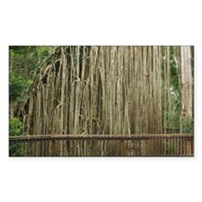 Curtain Fig Tree, Atherton Tab Decal