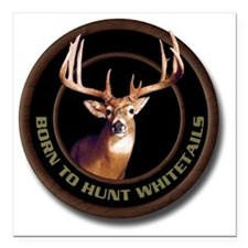 "Whitetail Deer Square Car Magnet 3"" x 3"""